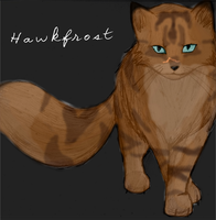 Hawkfrost by leftysmudgez
