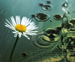 Flower in the rain by Ellie--Jelly