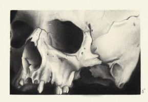 Skull Drawing by lovedolphins10409
