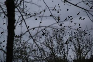 crows2012 1 by Be-Lyle