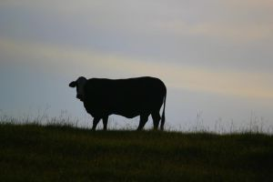 Cow Silhouette by Rjet33