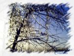 Ice covered Branches by KenshinKyo