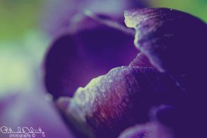 Macro Untitled 5 by TrickD123