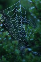 web by CrisisCorps