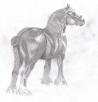 Clydesdale by Eregorn