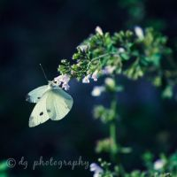 Hanging On 5238 by DG-Photo