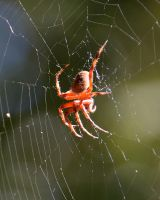 Spider 10-9-13 ID? by Tailgun2009
