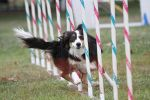 Agility - California - III by Deliquesce-Flux