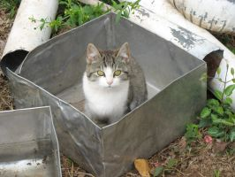 Cat in can by y00h00grl