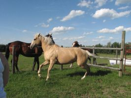 Horse Stock 15 by wildpbq-stock