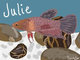 Betta Fish: Julie (Redone) by myexplodingcat