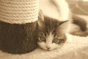 beautiful small cat 1 by life-is-pichi