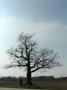 Old Hanging Tree by ArtyD2