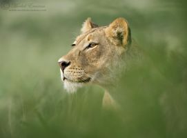 Emerging Queen by MorkelErasmus
