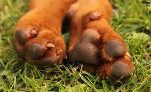 Paws by VeruPhotos