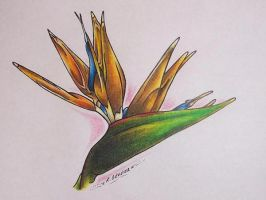 Tropical Flower Drawing by ritch-g