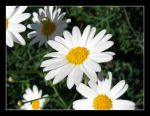 more flowers by zeyus