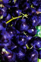 Graped by Eluded-By-Exclusion
