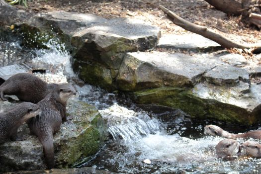 River Otters by BleachedJam