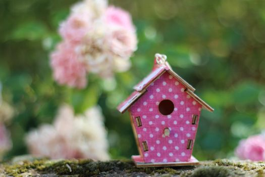 Birdhouse Stock 03 by Malleni-Stock