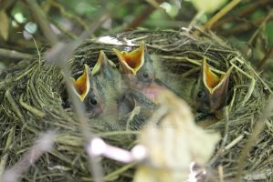 The nestlings. by Armigerer