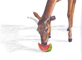 Like to have some watermelon? by bleistiftkind
