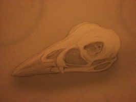 Bird Skull by Chequer