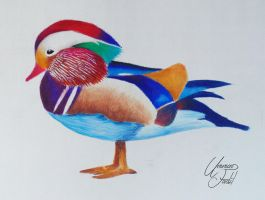 A Mandarin Duck - Colored pencils. by f-a-d-i-l