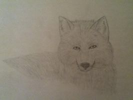 My first realistic wolf by WolfOfTheMoons