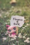 Flowers For Sale by tracieteephotography