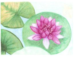 Lilly Pad - Work in Progress by molicalynden