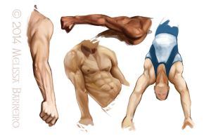 Skin and Muscles Study 1 by Pencil-Bender