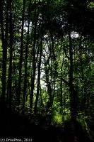 Forest in Summer by DroePhos
