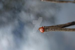 Ladybug in the pond by JulieDing