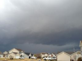 I think this is a wallcloud by biostings