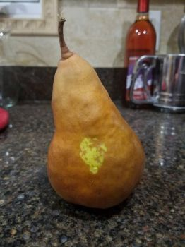 Pear meme. (since everyone else is doing it.) by Mikeyleswashbuckler
