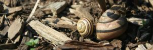 Snail Shells Abandoned by Reborn-Memories
