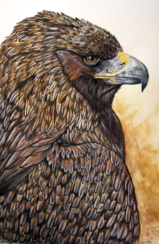 Eagle portrait by AnsticeWolf
