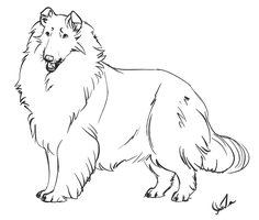 Rough Collie Lineart - PAY TO USE by ForgottenAmnesty