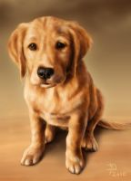 Golden Puppy by Pixx-73