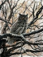 Winter Owl. by leelastarsky
