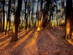 Sunset forest by Dave-M