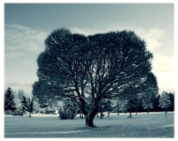 Winter tree by Skycode