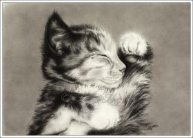 Sweet Dreams Little Kitten by Zindy