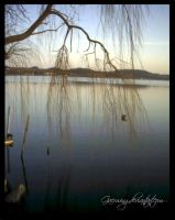 Lake and Tree by Gaerwing