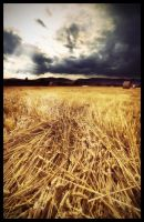 -Field- II by Roman89
