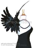 eps PSYCHE feather Wings 3 by eProductSales