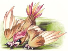 Pidgeotto by DestroyedSteak