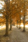 Autumn Path by RiffRaven