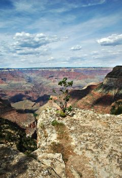 grand canyon VII by choney25